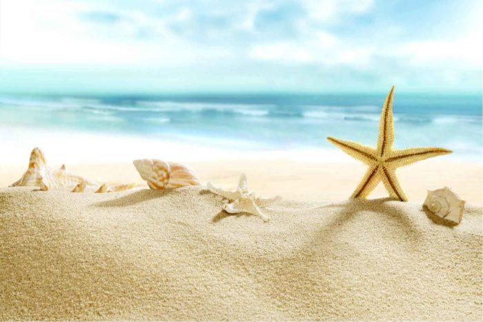 sea-starMIN
